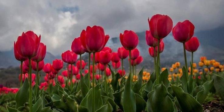 Cara Merawat Bunga Di Taman