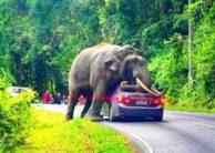 Keseruan Mengunjungi Taman Safari Indonesia dengan Wahana-Wahana Menarik di Dalamnya