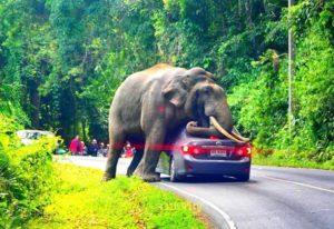 taman safari puncak bogor